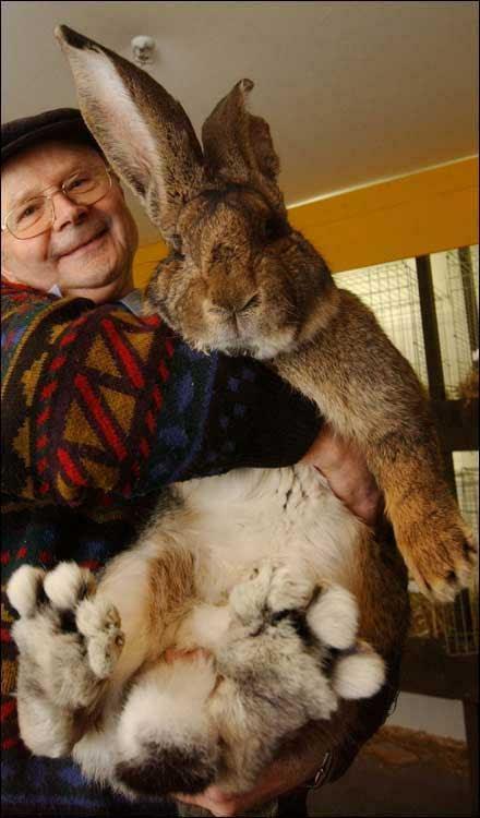 rabbits nibbling