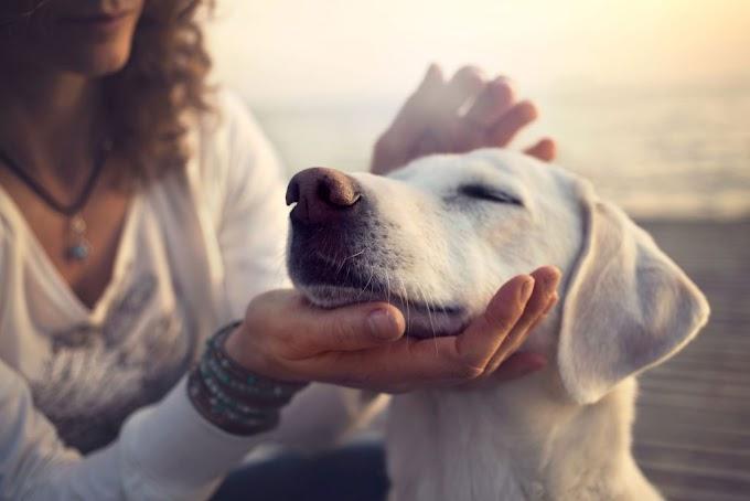 ¿Por qué los perros bajan las orejas?