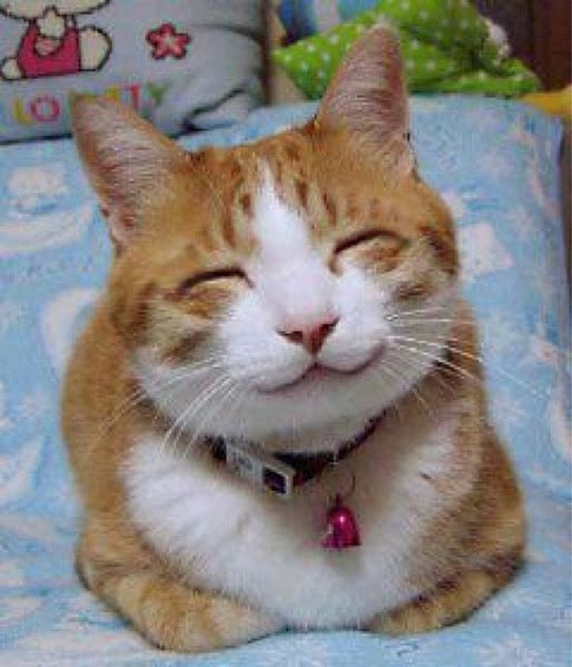 File:So happy smiling cat.jpg