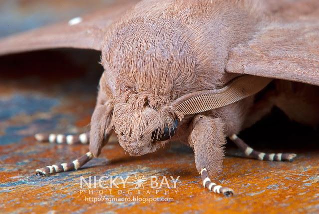 Moth - DSC_4796