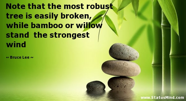 Note That The Most Robust Tree Is Easily Broken Statusmindcom