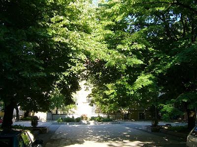 Yambol Trees