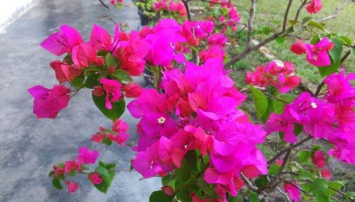 30 Gambar Bunga Terindah dan Tercantik di Dunia Lengkap