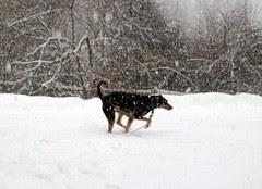 Tut_snow11809