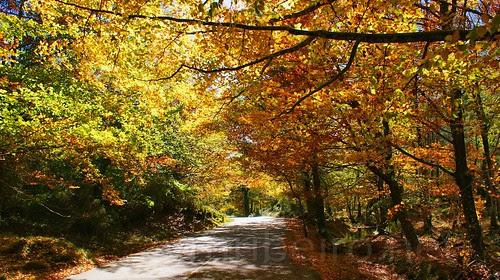 Outono na Mata de Albergaria (Gerês) by VRfoto