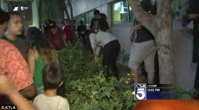 Huge hunt: Hundreds of people searched at bus stops, in rubbish bins and through gardens in search of the hidden cash in Burbank, Los Angeles on Thursday night