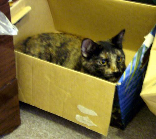 Ava in a box