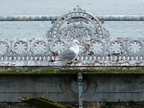 11251 - Kittiwake on Mumbles Pier