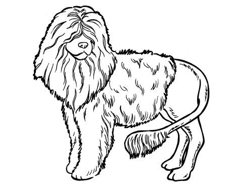 Dibujo De Perro Caniche Para Colorear Dibujos Para Colorear