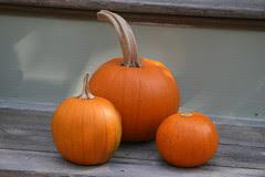 Baby Pam pumpkins