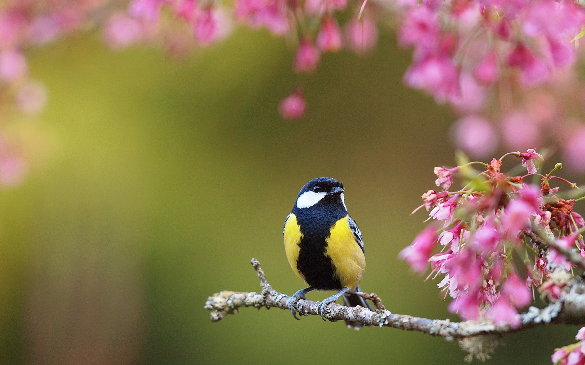 Spring Blooms Bird Wallpaper 1920x1200 31837