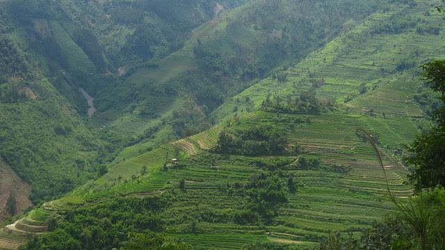 Rice terraces from the bus window, Yuanyang en route to Jianshui