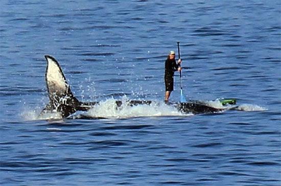 Surfe na baleia