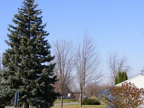 November View