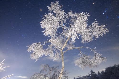 ☆Hoarfrost Queen (Ice dancing)☆