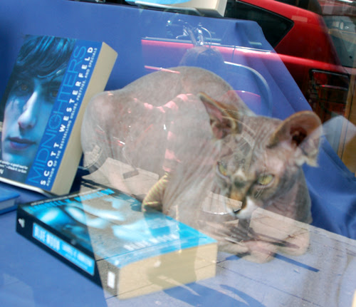sphinx-in-bookstore.jpg
