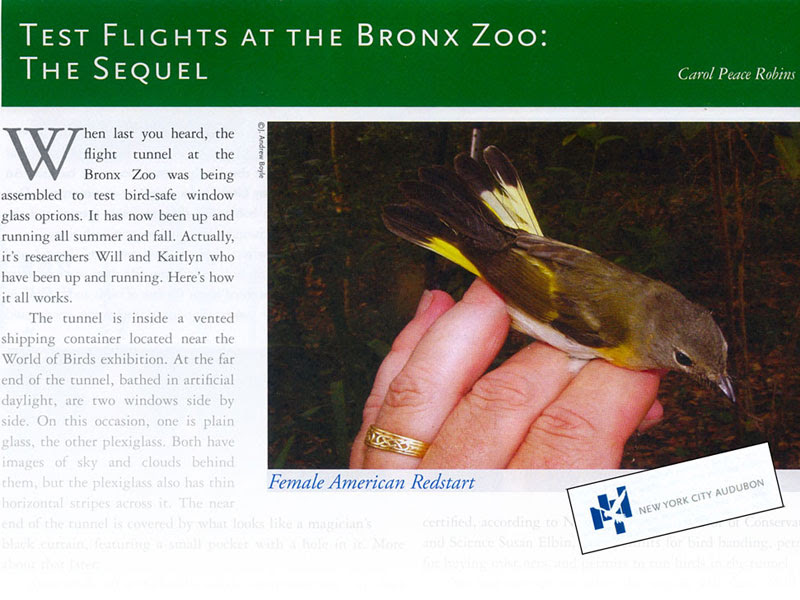 New York City Audubon Article