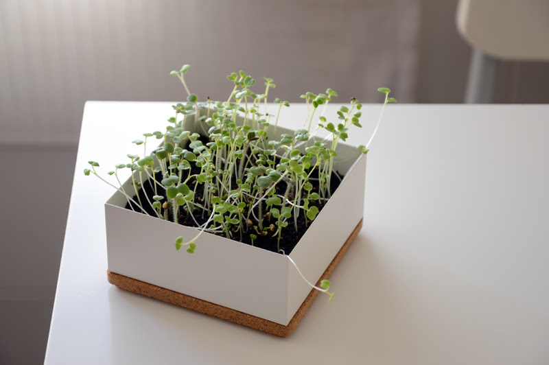 microgreens // microvegetais Life in a Bag