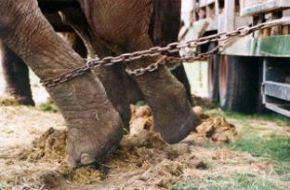 El Salvador dio un paso en el continente para acabar con el cautiverio de animales en los circos.