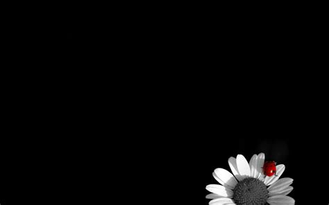 black  white wallpapers high quality