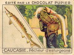 pup caucasie 5