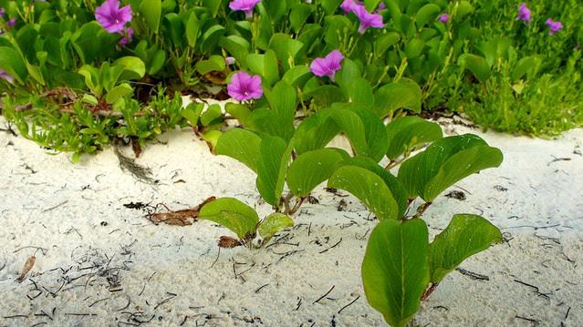 anteketborka.blogspot.com, vegetation5