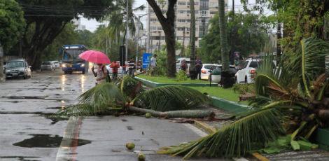 Árvores caídas na avenida Mario Melo / Ashlley Melo/JC Imagem