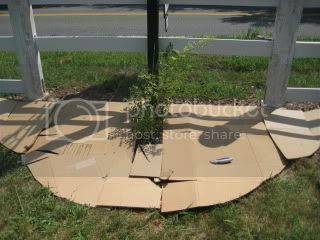 Cardboard Under the Mulch