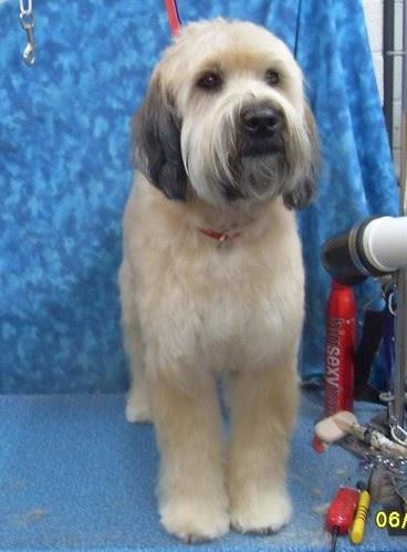K Style Dog Grooming