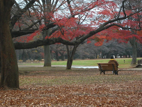 Man beneath the red leaves of Yoyogi Park