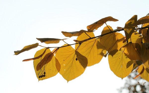 nicu's FOSS'n'stuff: More autumn wallpapers