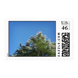 Snow-tipped Pine Tree on Blue Sky – Medium stamp
