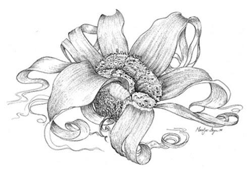 Flowers, Plants, Design