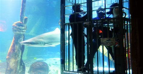 You May Now Kiss the Great White: Shark Enthusiasts Say ?I