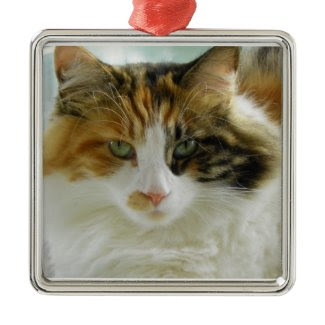Ornament Maine Coon cat Lexus ornament