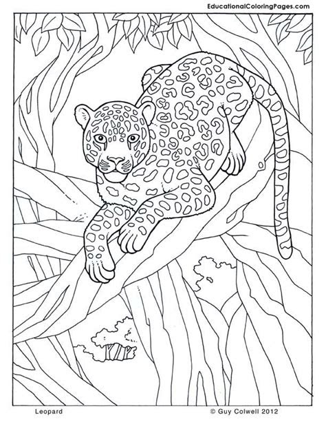 animals coloring sheet animal coloring pages  kids