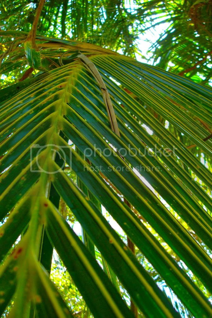 Palm Ferns Pictures, Images and Photos