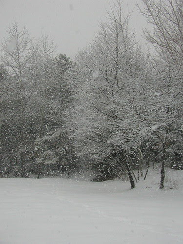 yet more snow!