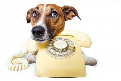 Poison Control Number For Dogs Free