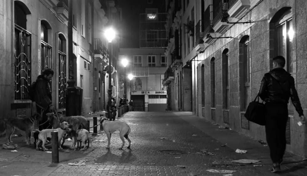 Fotografía 'Galgos', del libro 'Historias de mi calle'.