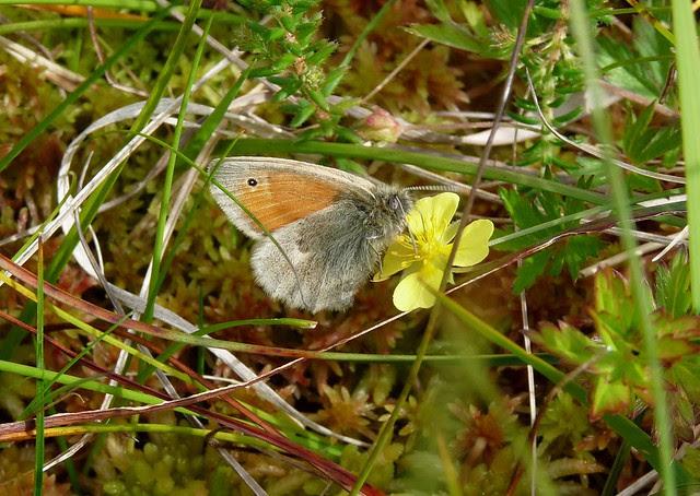 24569 - Small Heath, Isle of Mull