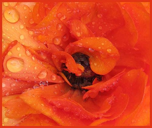 10 anemone heart