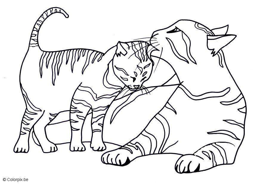 Gatitos Tiernos Bebes Para Colorear Az Dibujos Para Colorear