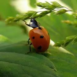 Standout ladybug