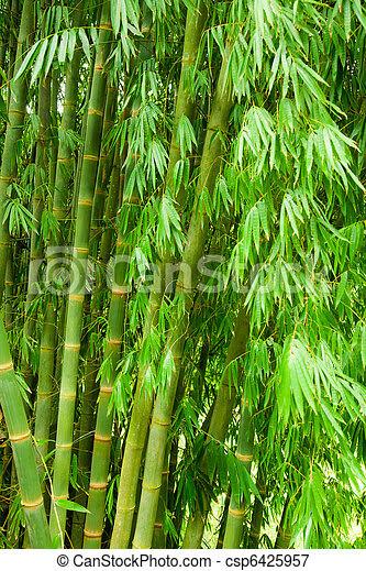 Indoor Garden Bamboo Tree Images