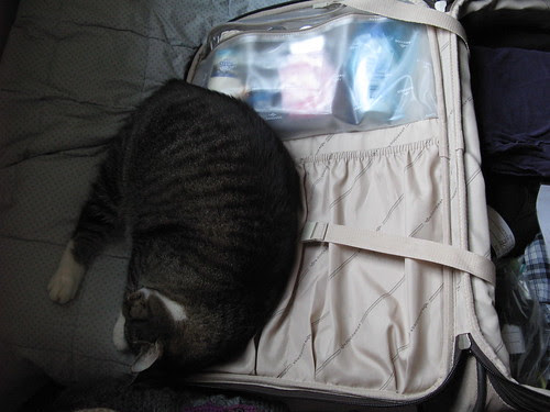 Don't pack the cat