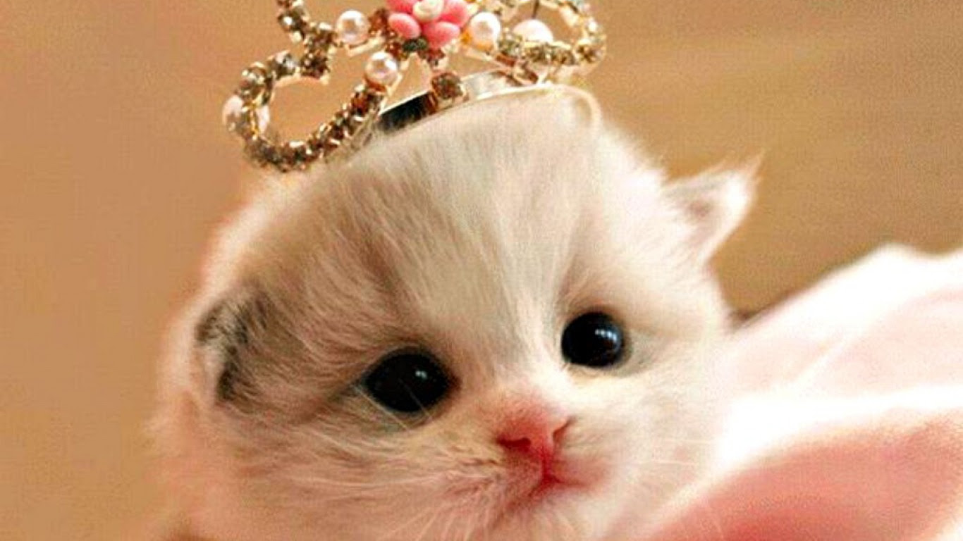 Gambar Wallpaper Bergerak Kucing Gudang Wallpaper
