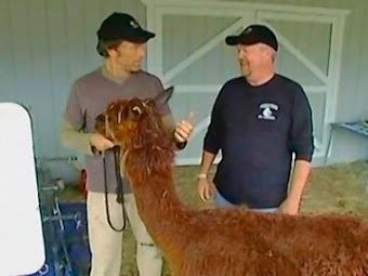 Alpaca Shearer