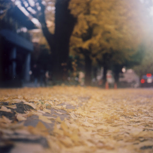 yellow leaves, yellow streets