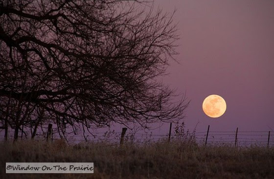 Image result for prairie moonrise